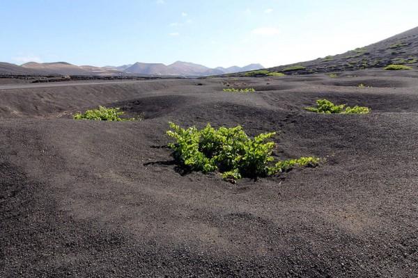 vulkan-boden-wein