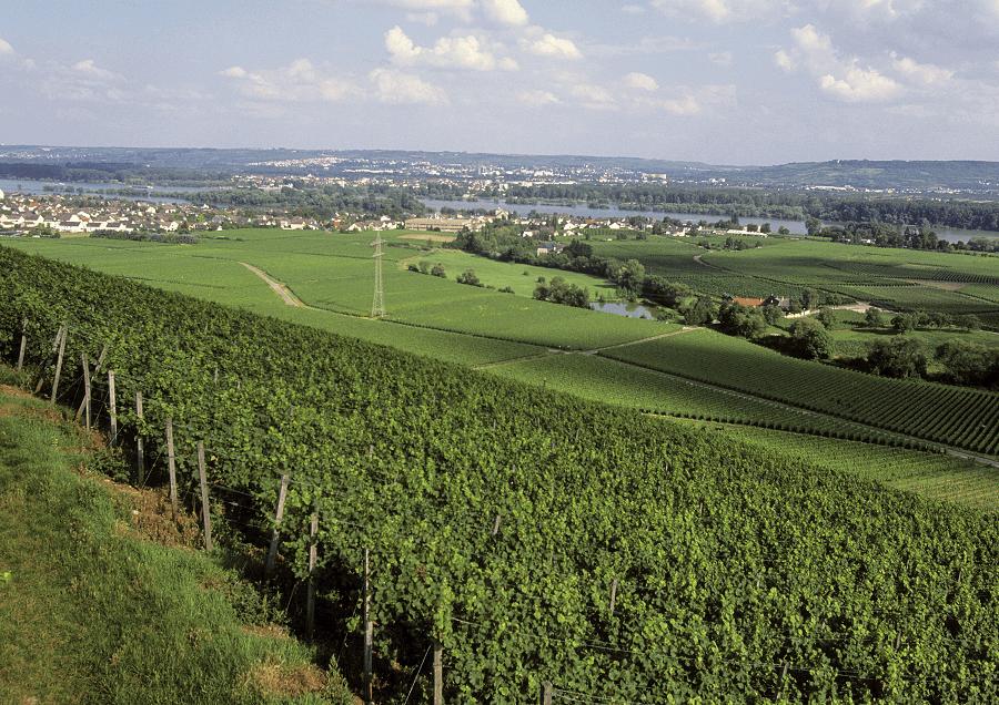 Deutscher-Wein