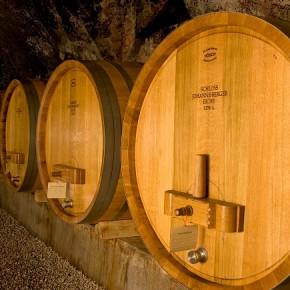Tannine & Gerbsäure im Wein - Was ist das und Wie schmeckt man sie?
