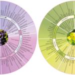 Weinaromarad – Schneller Weinaromen erkennen